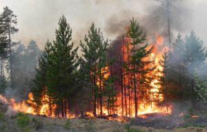 Основные правила поведения при пожаре в лесу