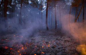 Как спастись от пожара в лесу