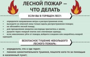 Правила спасения от пожару в лесу