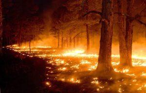 Температура возгорания травы