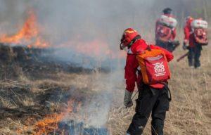 Полезен ли лесной пожар