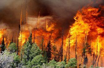 Причины возгорания леса