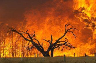 Самые крупные лесные пожары в мире